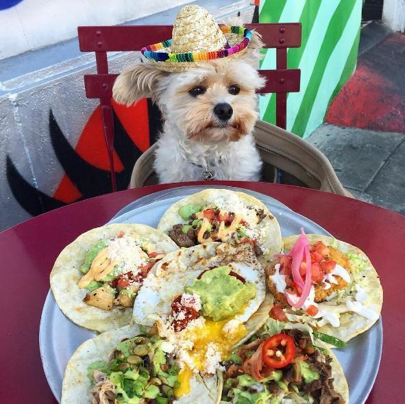 popeye-perrito-callejero-encontro-familia-y-es-famoso-gourmet-18-a