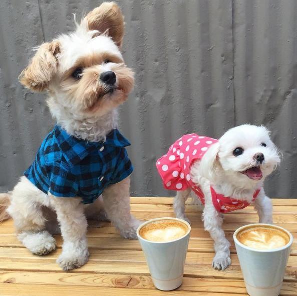 popeye-perrito-callejero-encontro-familia-y-es-famoso-gourmet-21