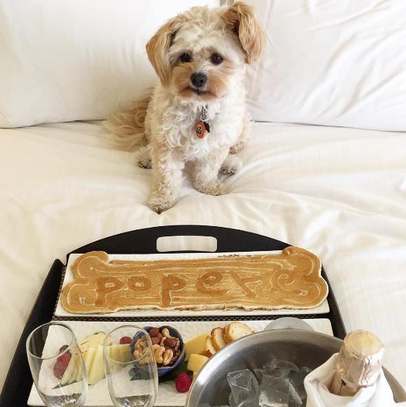 popeye-perrito-callejero-encontro-familia-y-es-famoso-gourmet-22