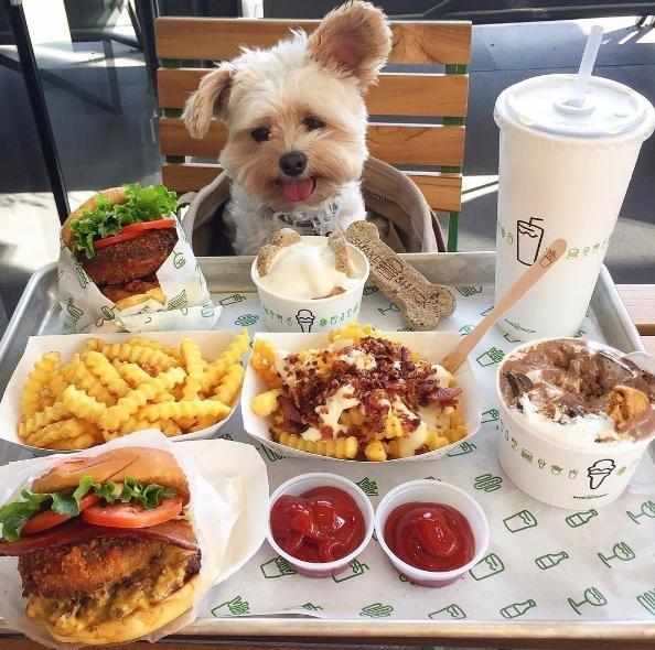 popeye-perrito-callejero-encontro-familia-y-es-famoso-gourmet-24