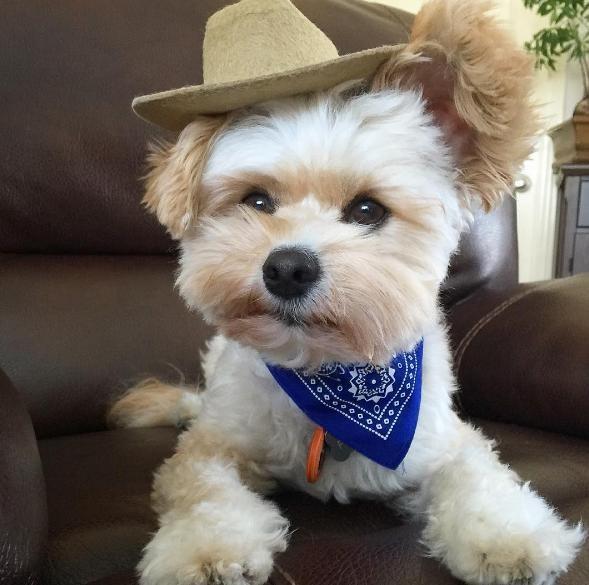popeye-perrito-callejero-encontro-familia-y-es-famoso-gourmet-3