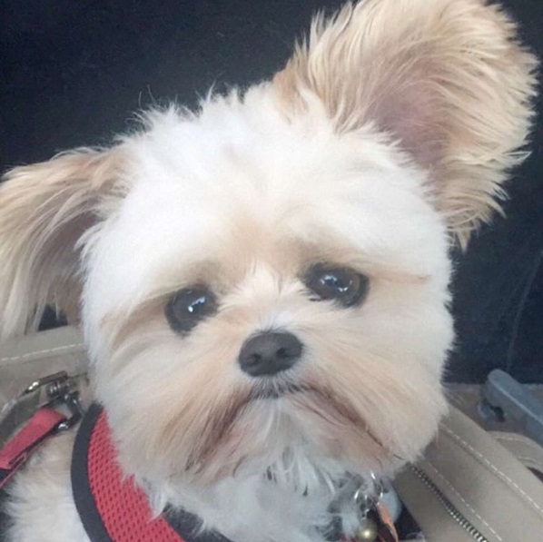 popeye-perrito-callejero-encontro-familia-y-es-famoso-gourmet-5