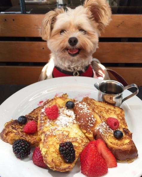 popeye-perrito-callejero-encontro-familia-y-es-famoso-gourmet-8