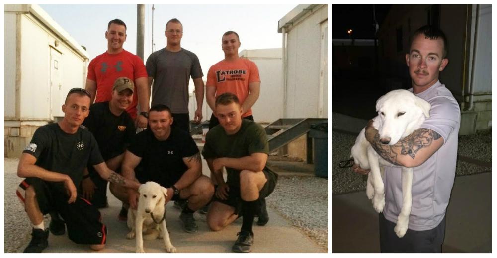 soldado-mision-salvo-perro-portada