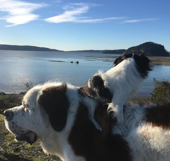 un-gran-perro-complacido-de-llevar-sobre-su-espalda-a-su-pequena-y-mejor-amiga-a-todas-partes-10
