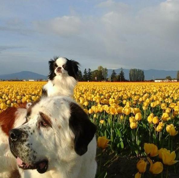 un-gran-perro-complacido-de-llevar-sobre-su-espalda-a-su-pequena-y-mejor-amiga-a-todas-partes-14