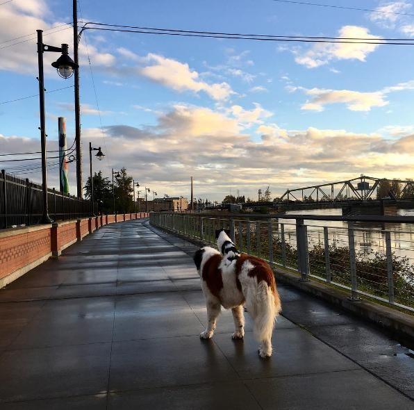 un-gran-perro-complacido-de-llevar-sobre-su-espalda-a-su-pequena-y-mejor-amiga-a-todas-partes-4
