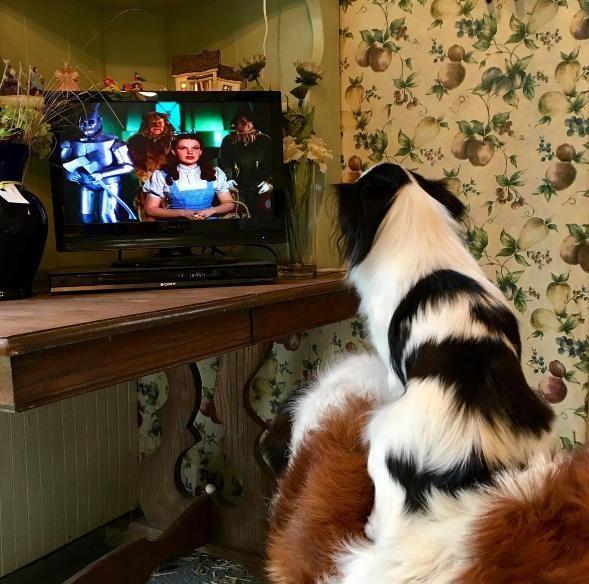 un-gran-perro-complacido-de-llevar-sobre-su-espalda-a-su-pequena-y-mejor-amiga-a-todas-partes-9