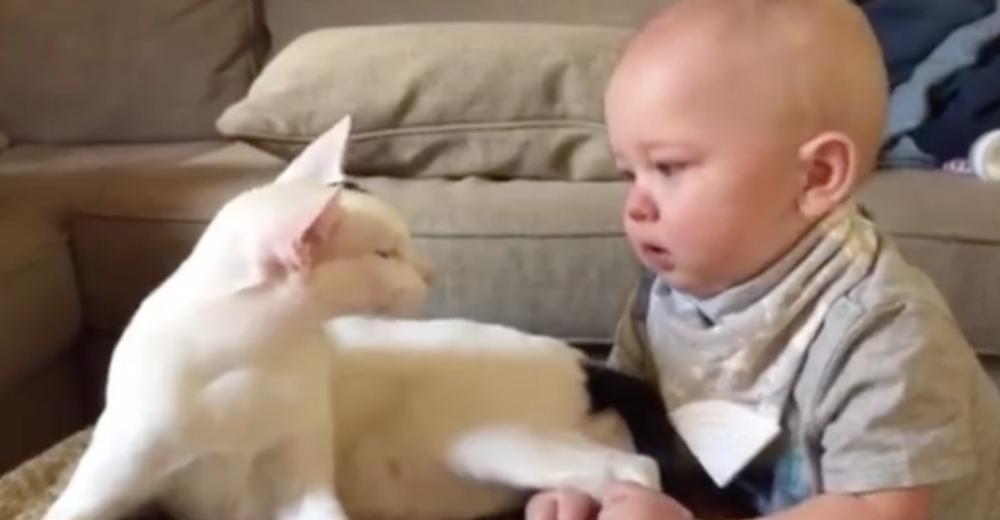video-gato-adoptado-bebe-portada