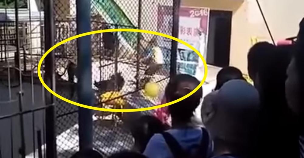 video-oso-maltratado-circo-china-portada
