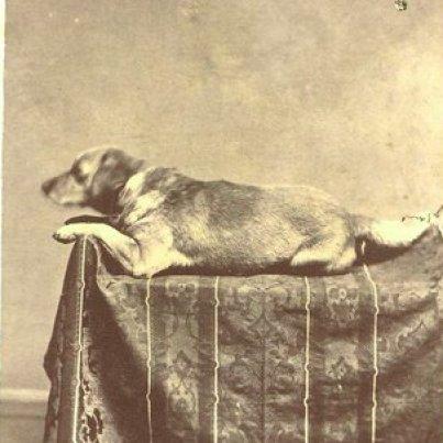 abe-lincoln-y-perro-4