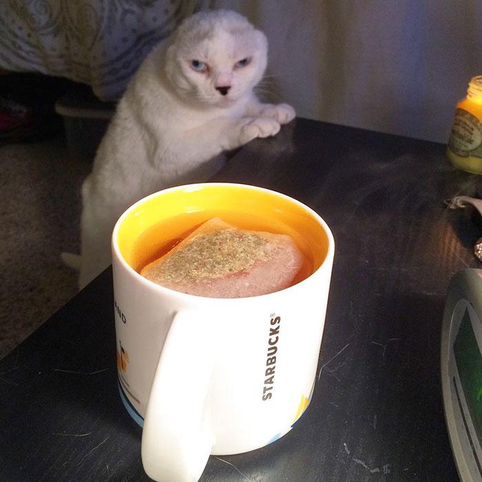 adopto-a-gato-sin-orejas8