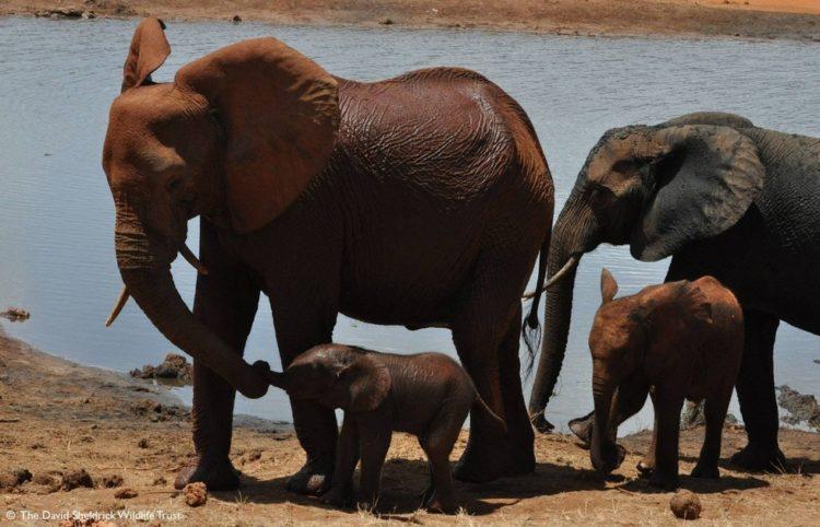 bebe-elefanta-10