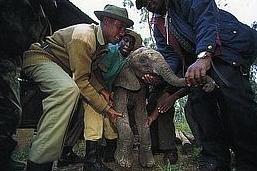 bebe-elefanta-3