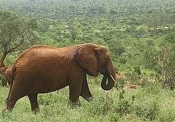 bebe-elefanta-5