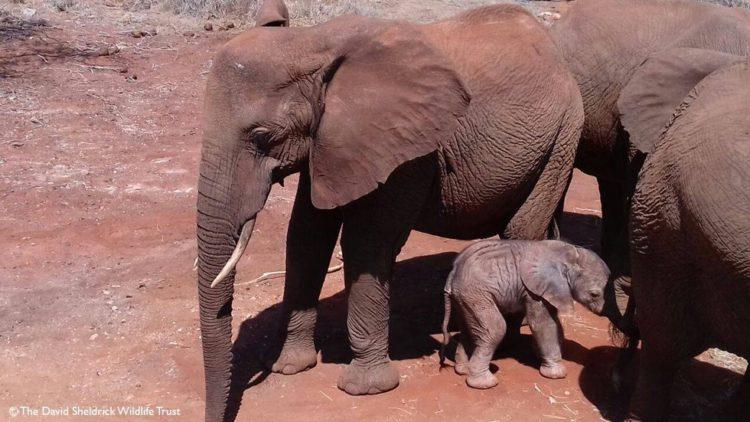bebe-elefanta-6