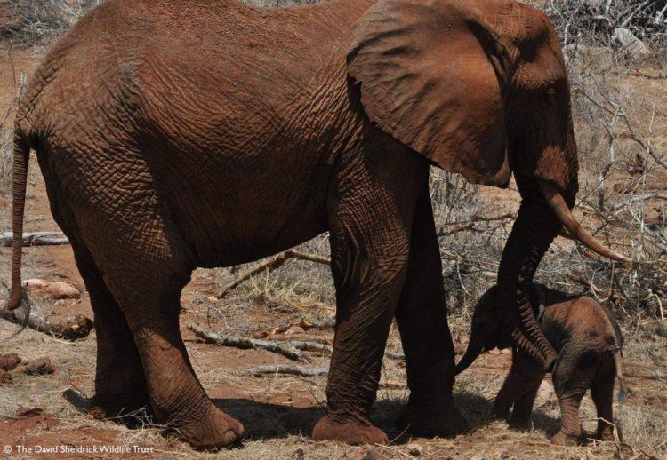bebe-elefanta-7