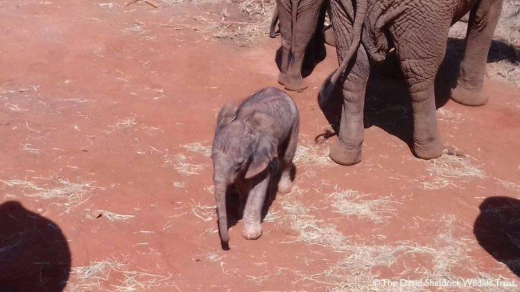 bebe-elefanta-8