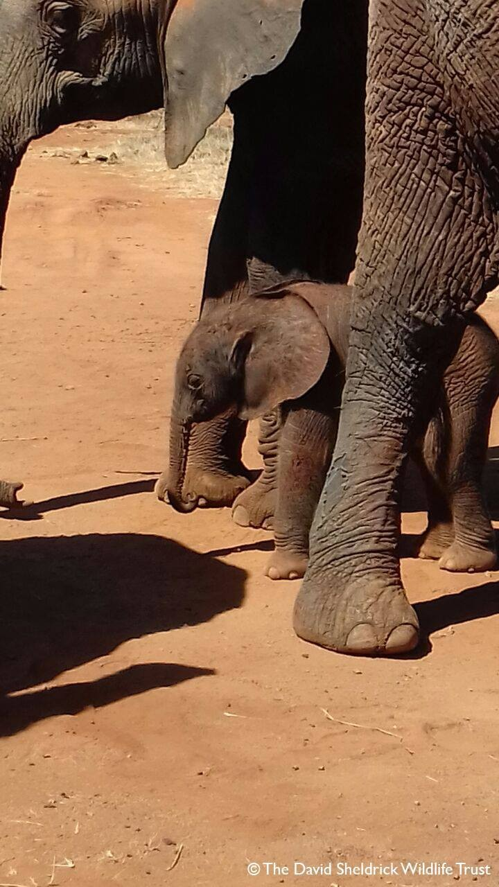 bebe-elefanta-9
