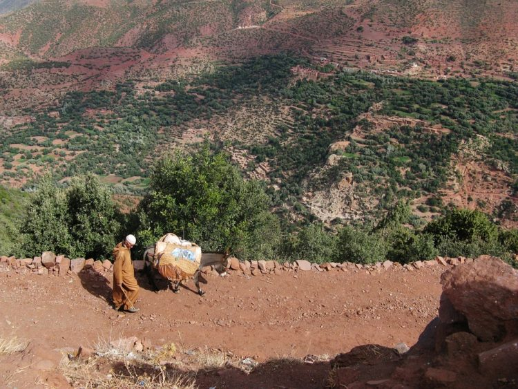 china-burros2