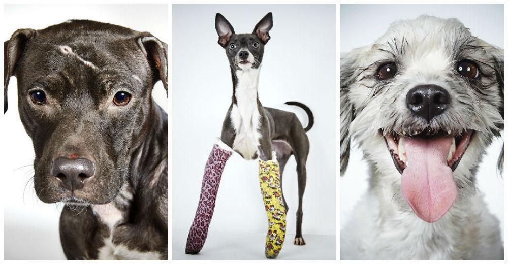 fotografo-ayuda-perros