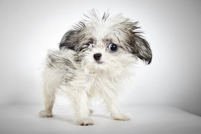 fotografo-ayuda-perros1