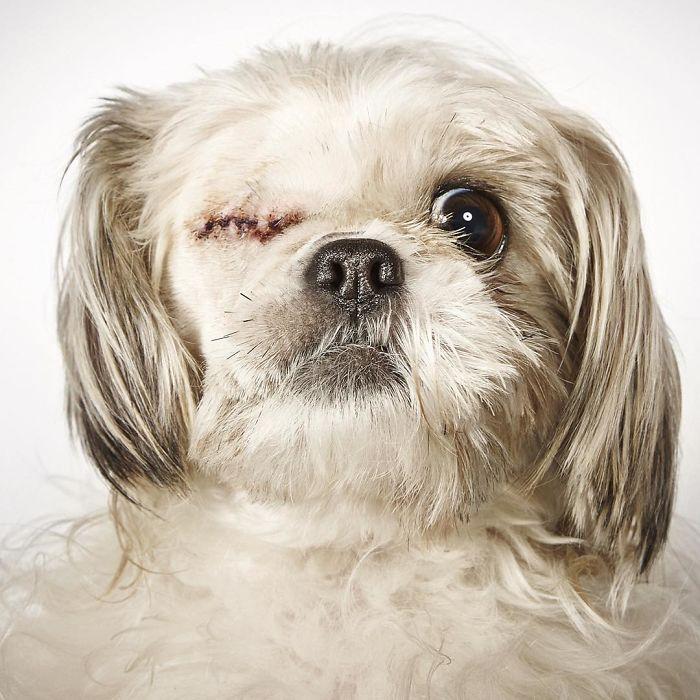 fotografo-ayuda-perros10
