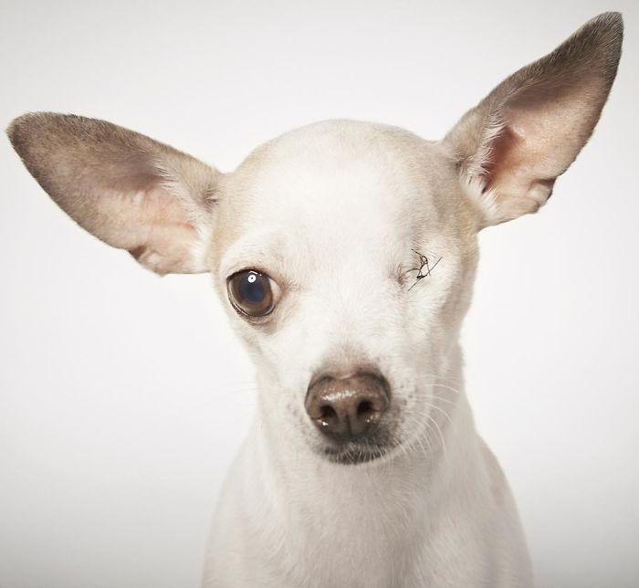 fotografo-ayuda-perros4