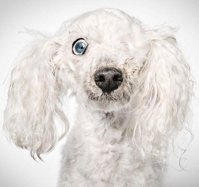 fotografo-ayuda-perros7