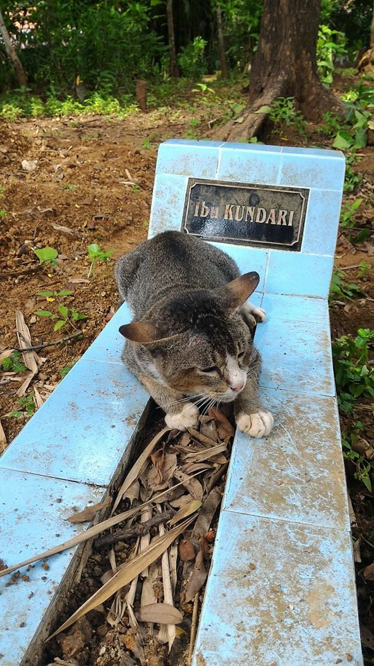Recent photo of a cat guarding the grave of her late owner. See SWNS story SWCAT; This grieving cat misses her late owner so much she has spent a YEAR living at her GRAVE. The heartbroken moggy was first heard crying while lying in the earth at the burial plot in Central Java, Indonesia. Passer-by Keli Keningau Prayitno, 28, tried to adopt the kitty but it returned to the same spot - cuddling the small blue headstone. Remarkably, the cat walks every day to her former home where she is fed by the old lady's children - then returns to the grave.