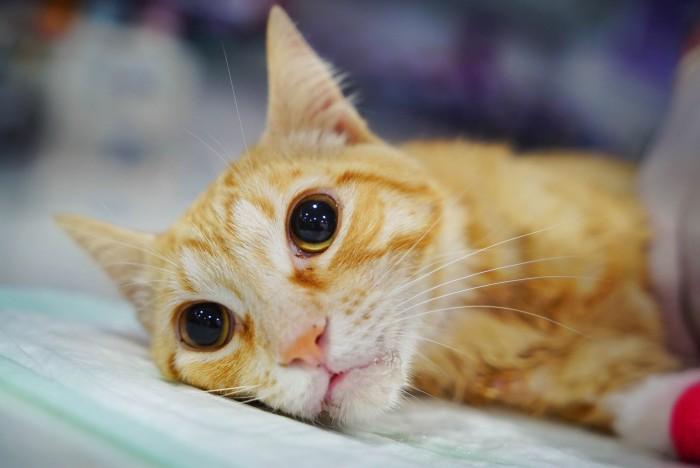 gato-maltratado-lucky2