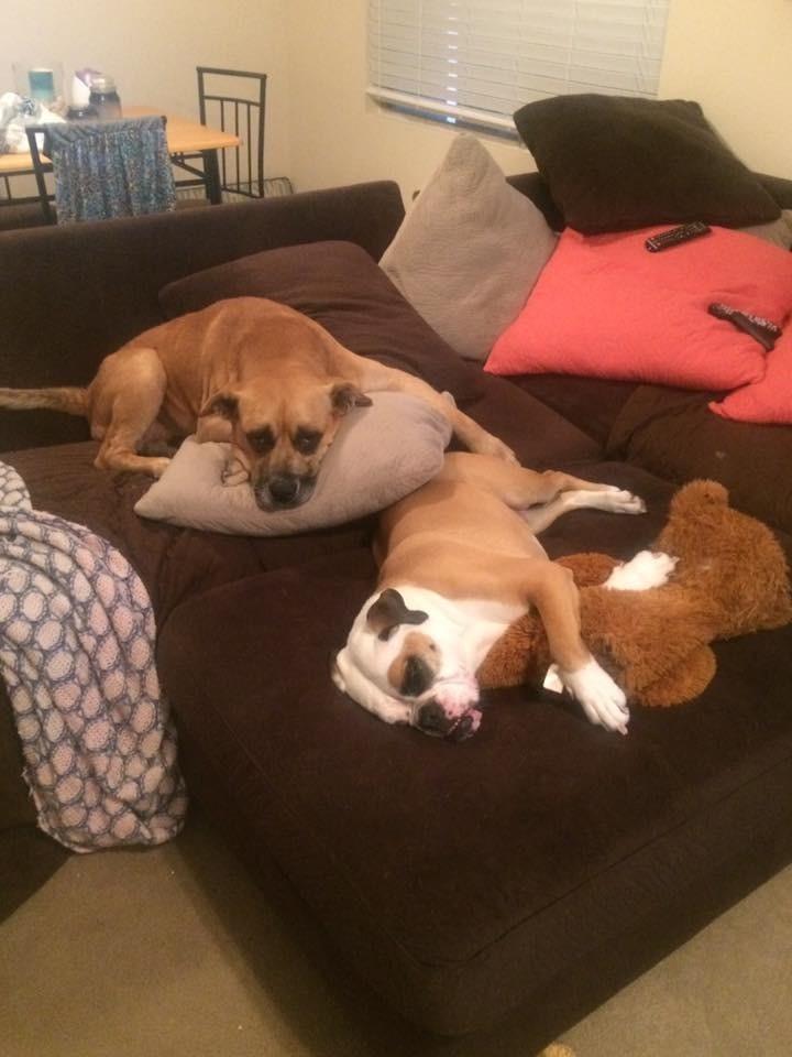 mama-adoptiva-canina-10