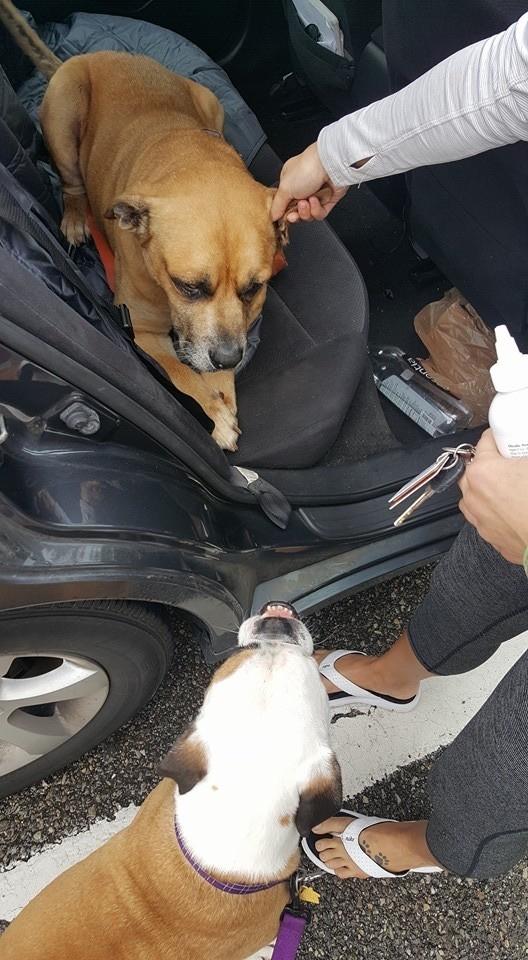 mama-adoptiva-canina-5