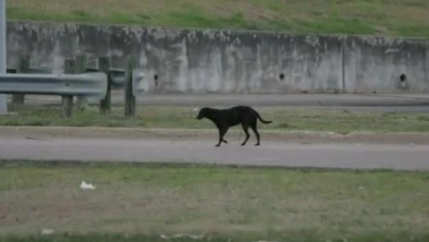 perrita-rescatada-cachorros-norah1