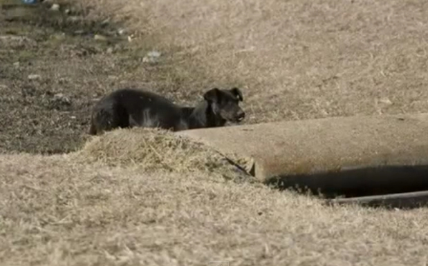 perrita-rescatada-cachorros-norah2