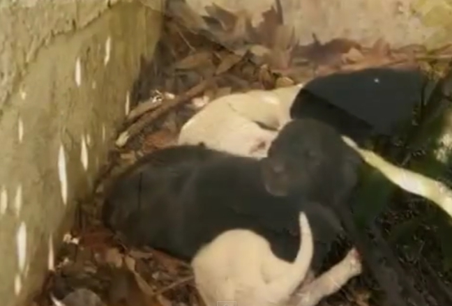 perrita-rescatada-cachorros-norah6