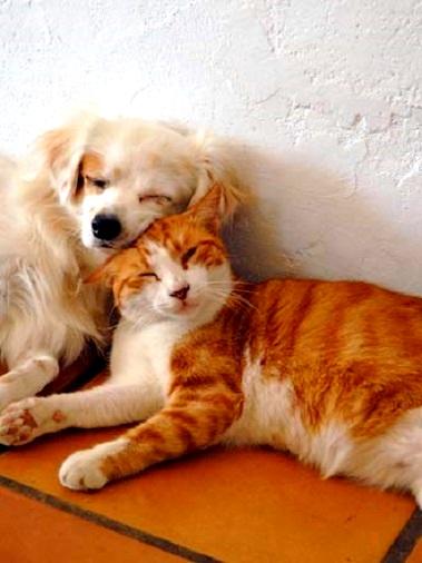 perritos-y-gatitos-10