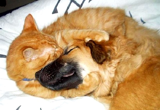 perritos-y-gatitos-11