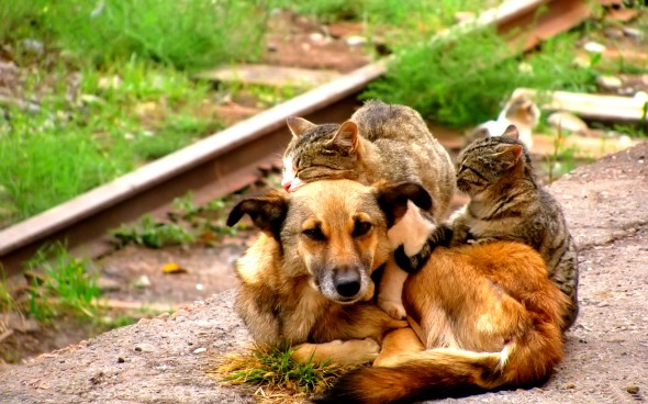 perritos-y-gatitos-14