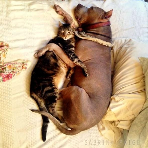 perritos-y-gatitos-4