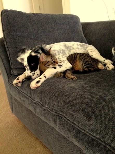 perritos-y-gatitos-6