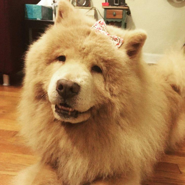 perro-enojon-bubbe-4