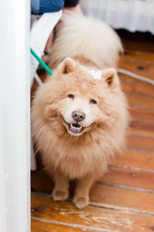 perro-enojon-bubbe-7