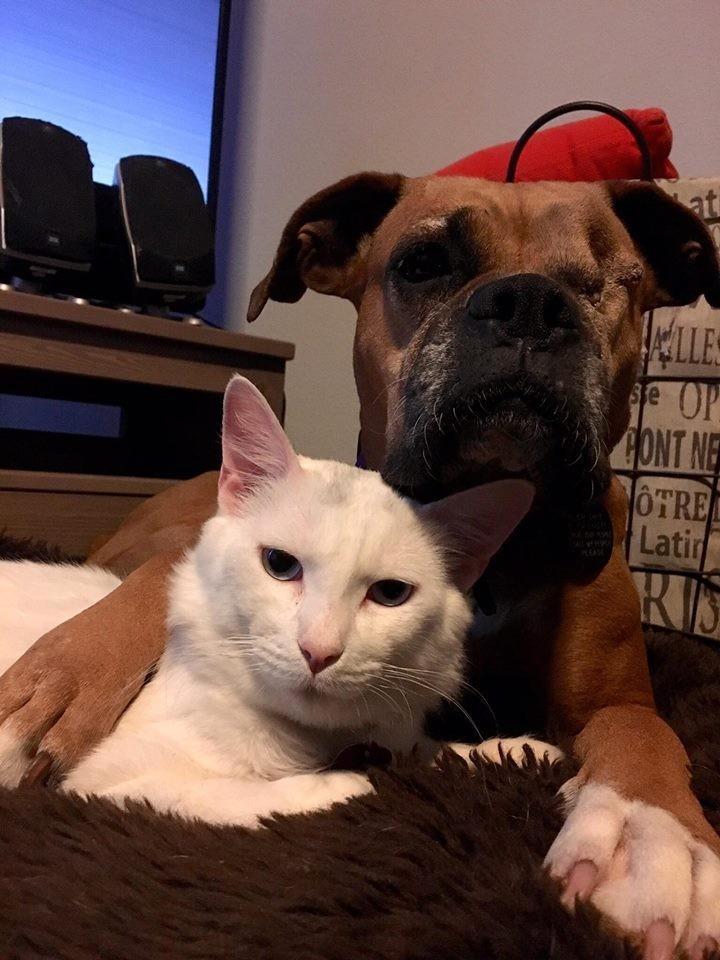 perro-gato7