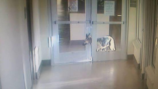 perro-quiere-salir-de-refugio-a-buscar-a-su-familia3