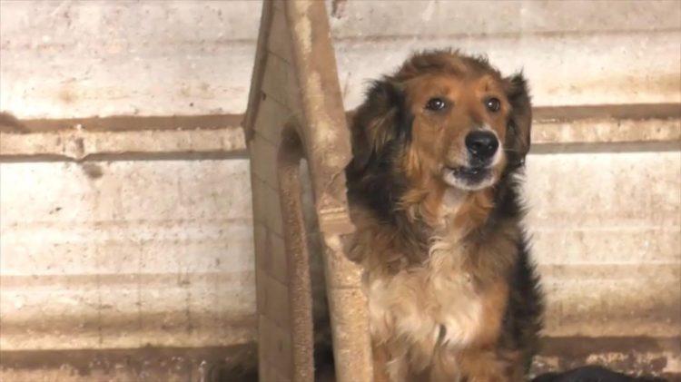 perro-rescatado-doba-3