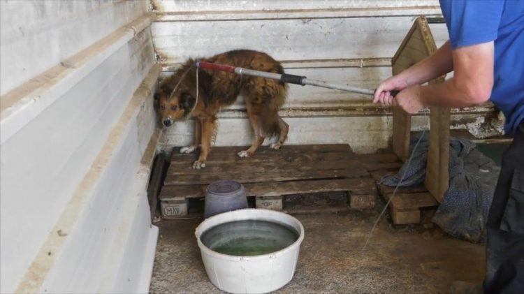 perro-rescatado-doba-5