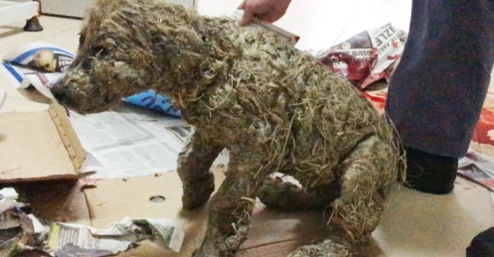 perro-rescatado-banado-en-pegamento1-copy