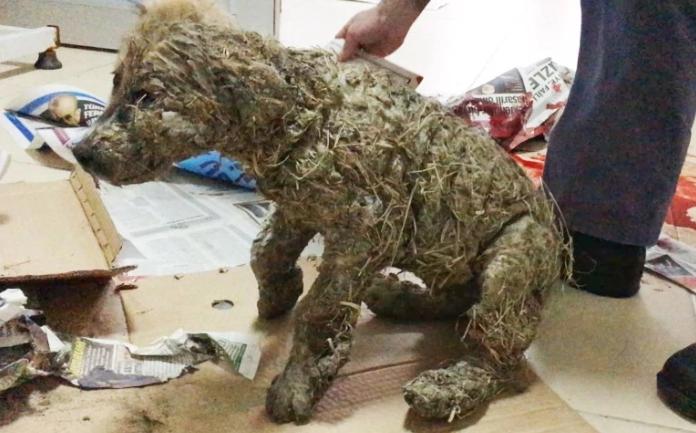 perro-rescatado-banado-en-pegamento1