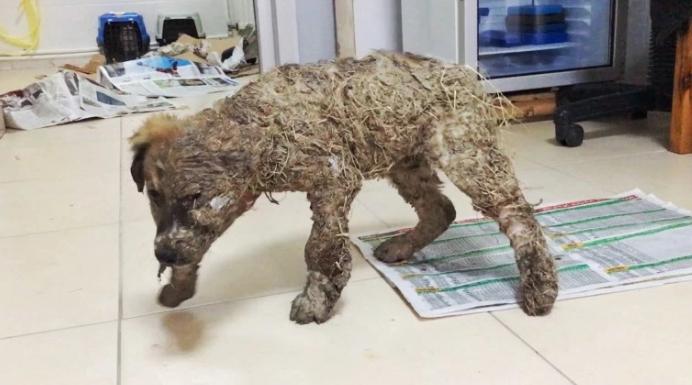 perro-rescatado-banado-en-pegamento2
